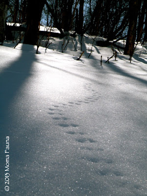 Small mammal tracks.  Did they make them in the Moonlight?