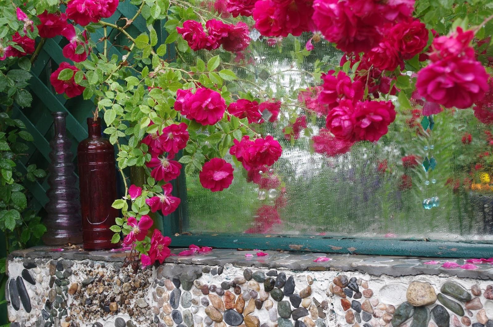 World4top rain on flower flower in rain wallpaper free download rain flower in rain wallpaper hd flower in rain wallpaper hq rain on flower wallpaper beautiful flower altavistaventures Image collections