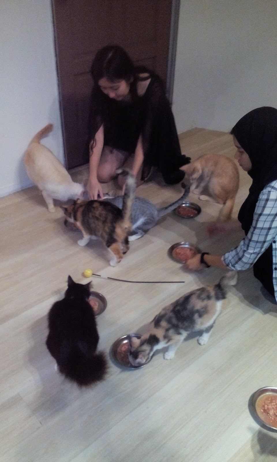The Staffs Feeding The Cats.