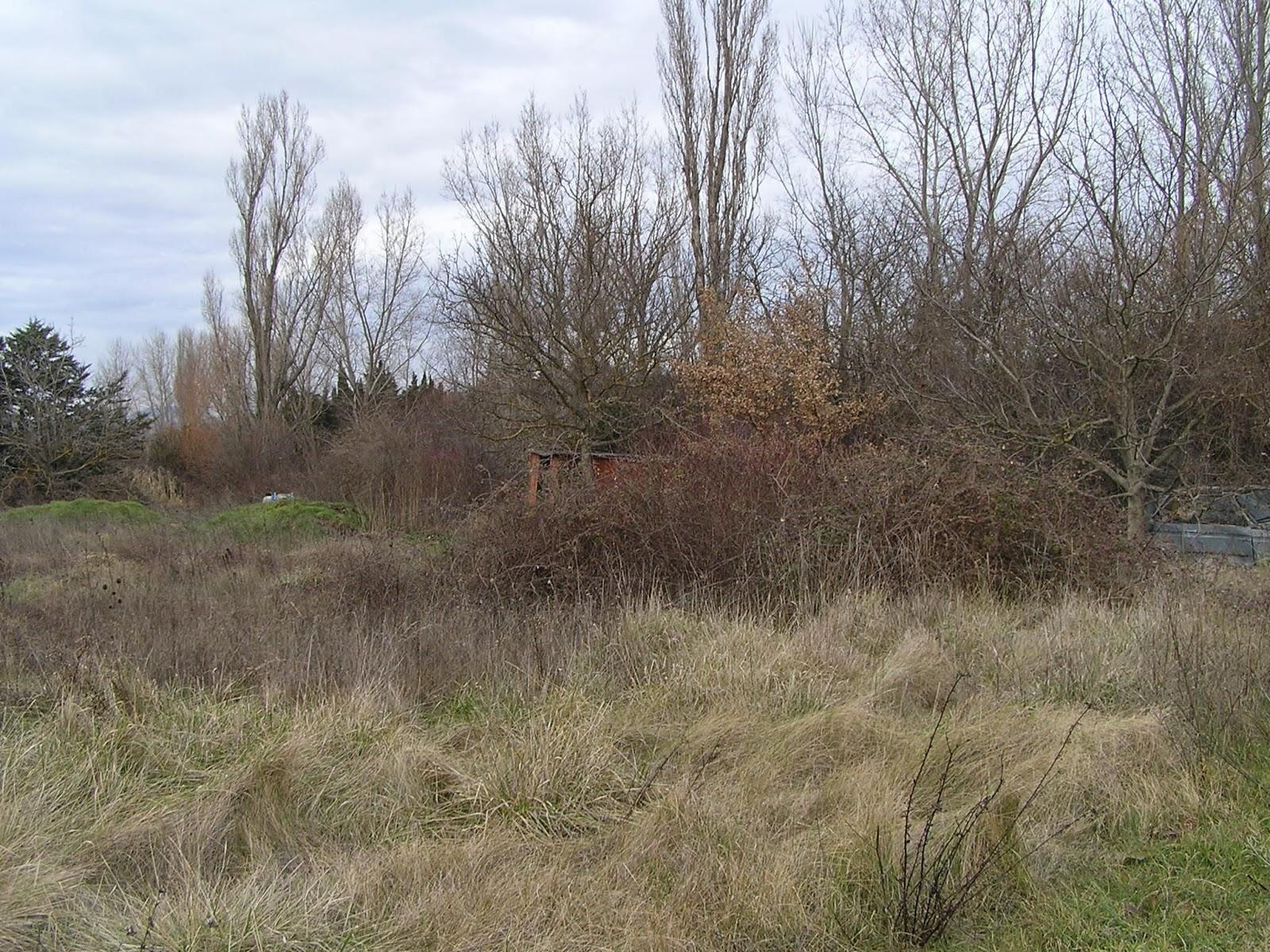 Les Travaux Du Jardin D Fricher Une Parcelle Bois E