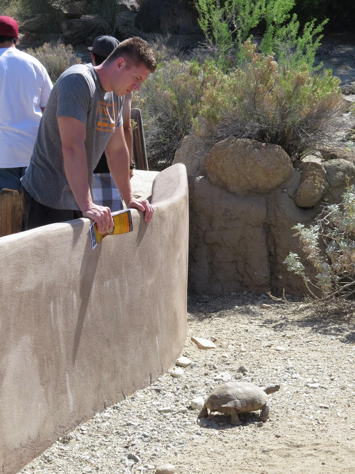 The Living Desert tortoise