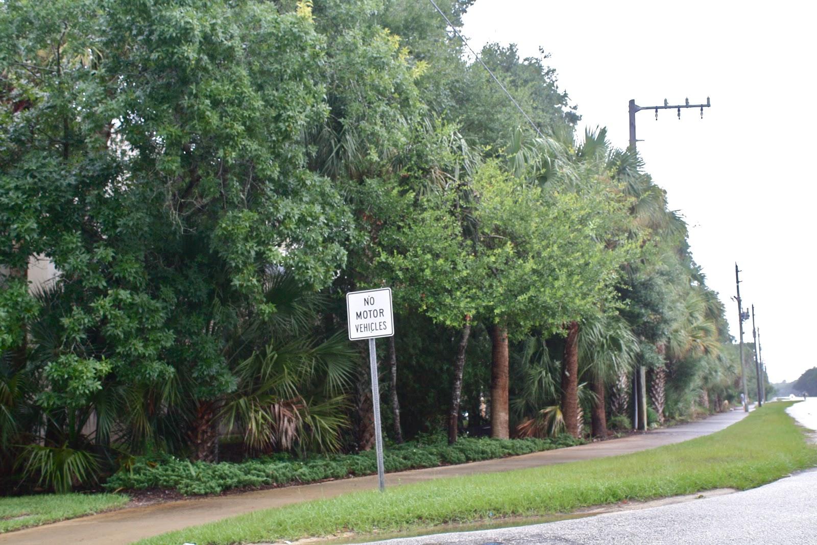 A1A Highway U0026 Native U0026 Florida Friendly Landscape Screen, Publix Grocery,  Hammock, Florida
