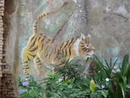 Zoo of the Week