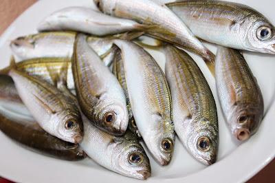 boghe pesce azzurro