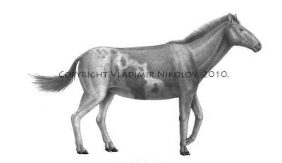 equidae prehistorica Sinohippus