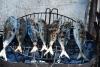 melhore a saúde comendo sardinha