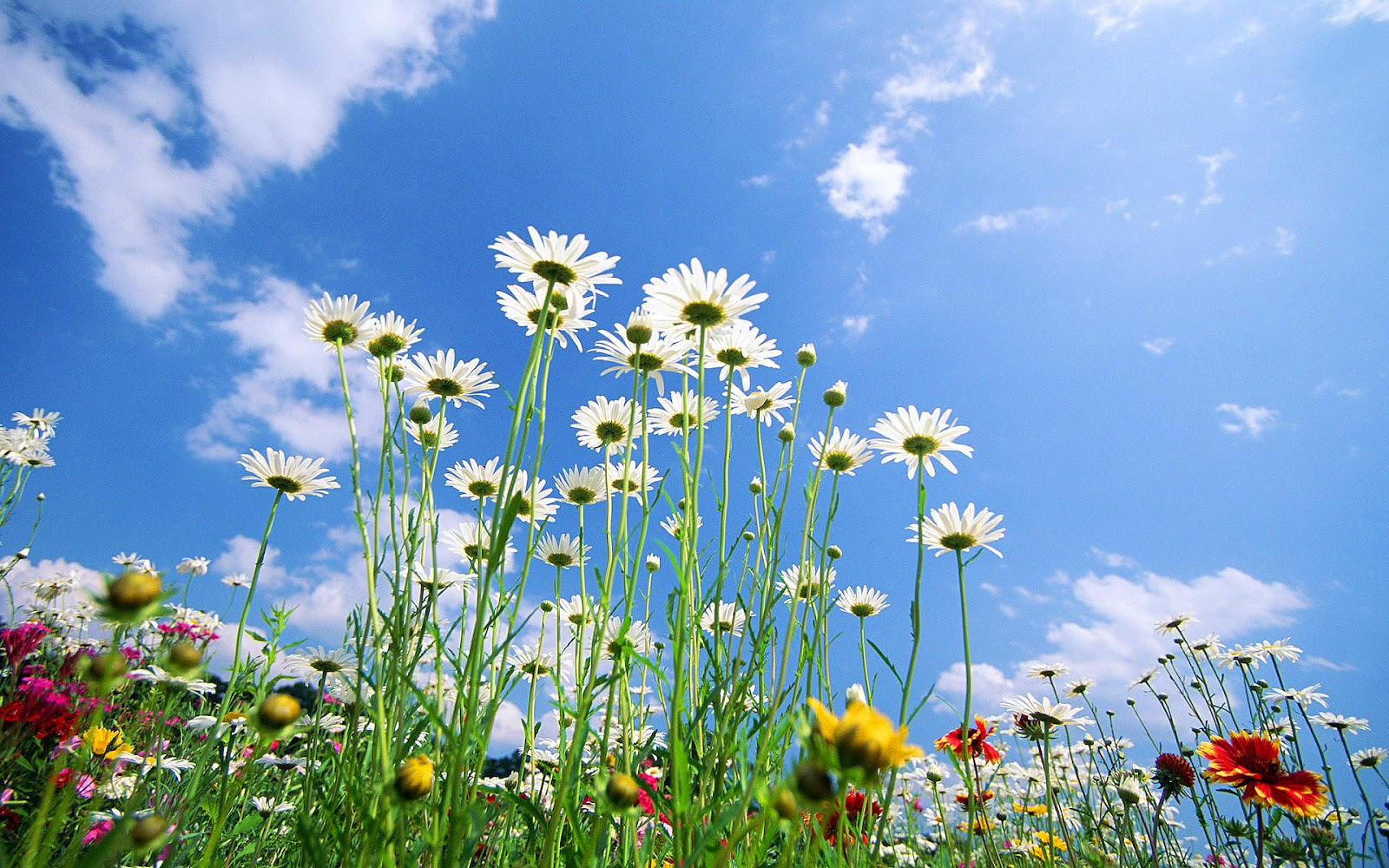 lente achtergronden hd -#main