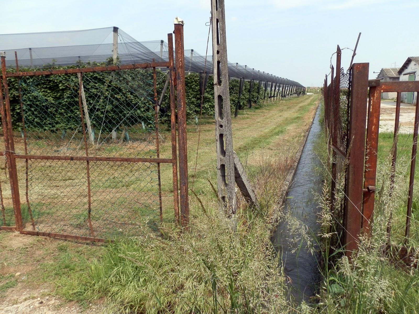 Acqua dai campi e disastro nelle case acqua dai campi for Irrigazione per sommersione