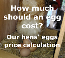 How much should an egg cost?