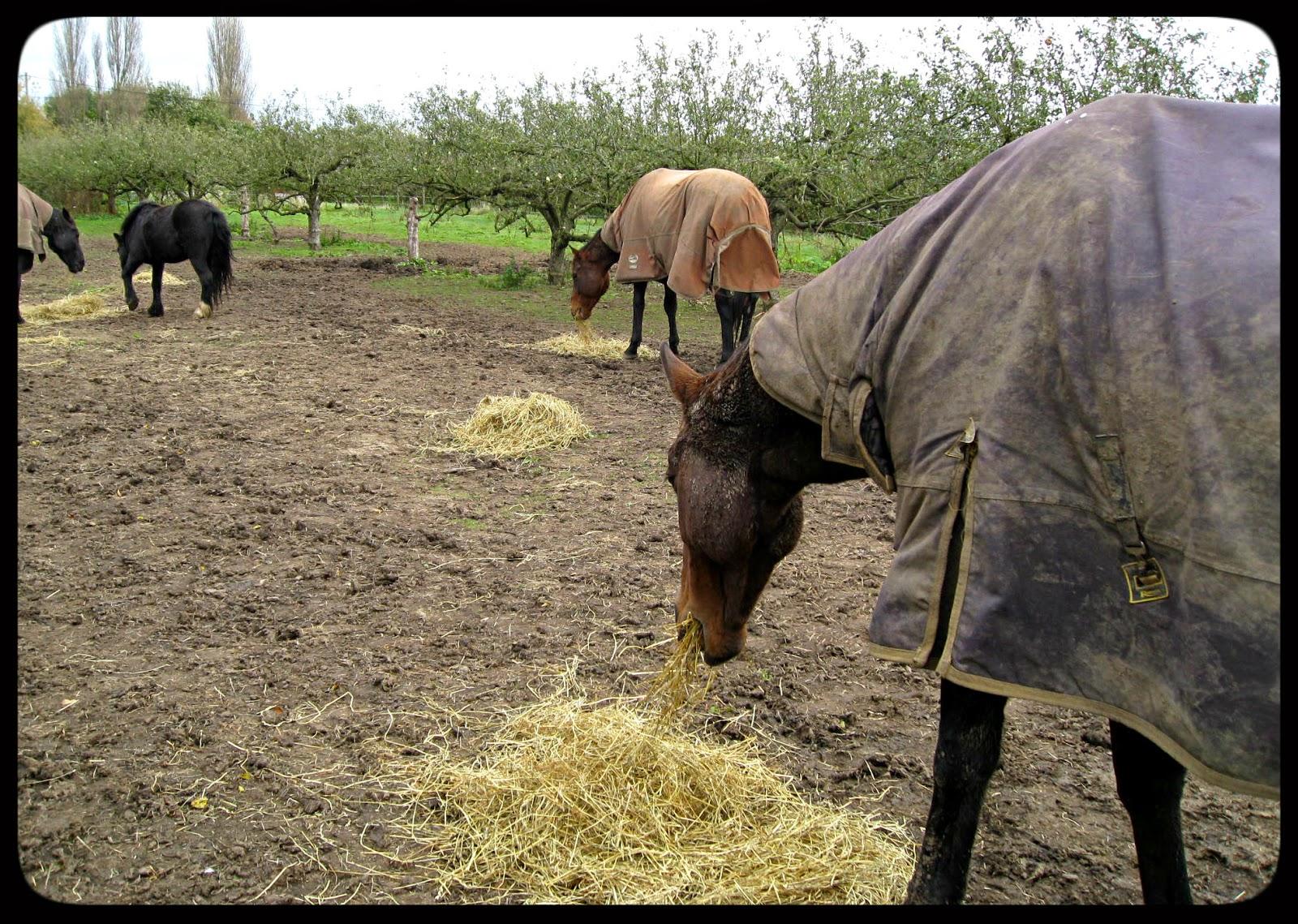 My Equestrian World: Everyday Stuff