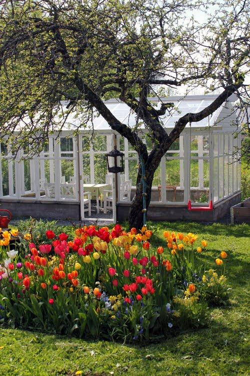 Bygg ett växthus av gamla fönster-klicka på blden och läs mer