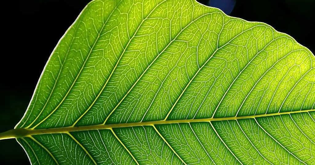 Las células de las plantas - Biología