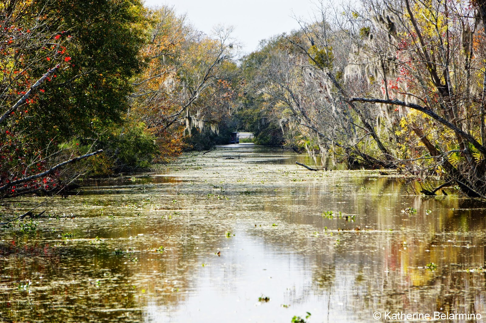Swamp Tours With Alligators New Orleans