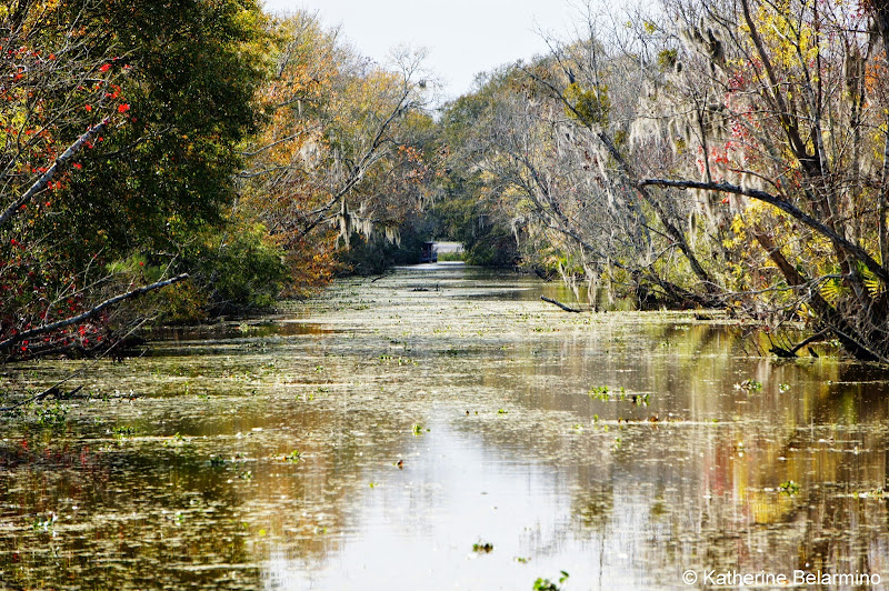 New Orleans Swamp Tour Canal