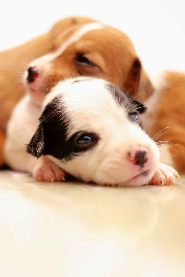 Adorable Two Puppies