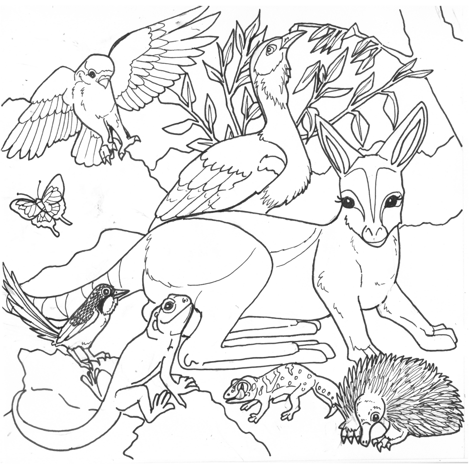 free coloring pages of australian desert