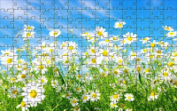 Daisy flowers puzzle