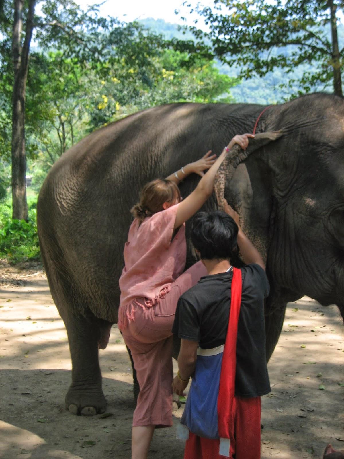 mahout-chiang-mai-elephant-jumbo-trekker