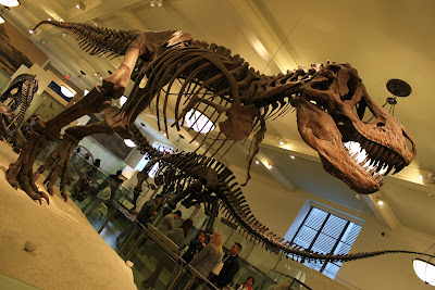 zoologiske museum københavn escort djursland