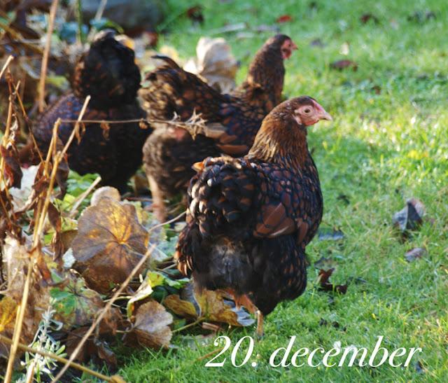 HavePlaner og PlanteBegejstring: december 2015