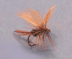 Brown Hackle Peacock dry fly with fan wings of mallard breast feathers, red hackle tail, peacock body and brown saddle hackle