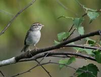 Cerita Hikmah: Perjalanan Seekor Burung Pipit