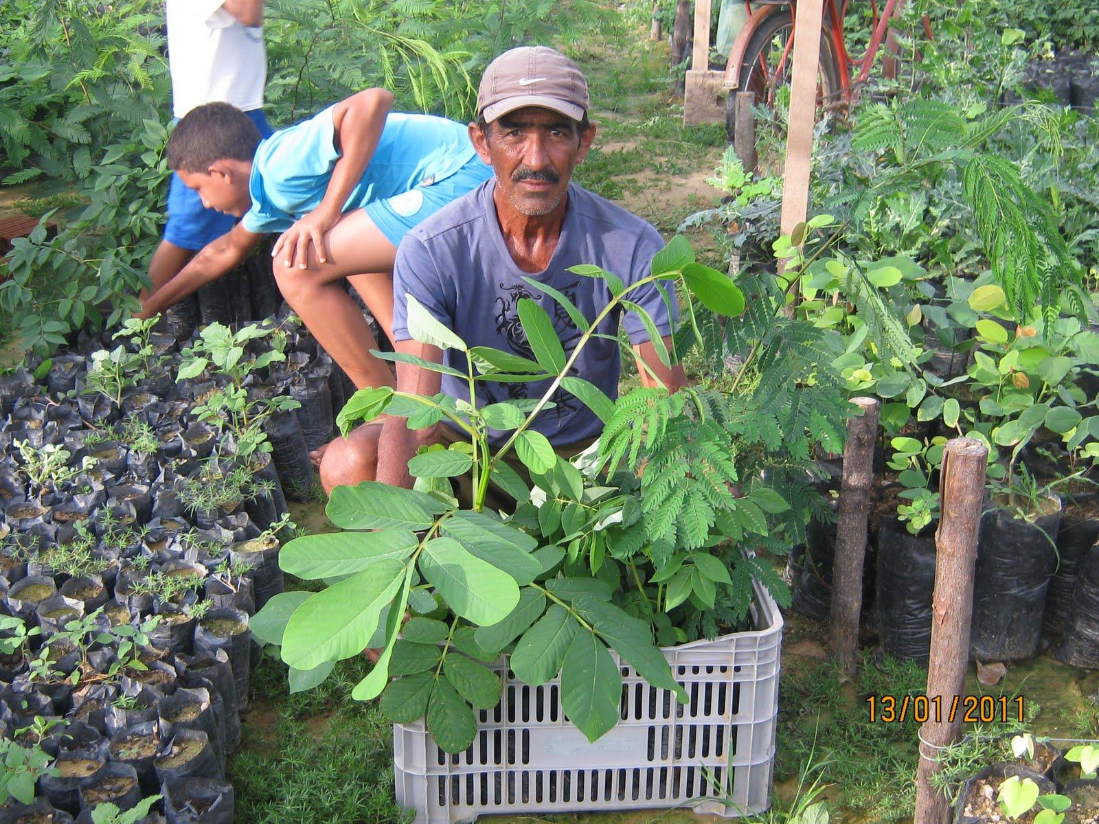 Plantas da caatinga s o usadas para alimenta o dos for Plantas exoticas online