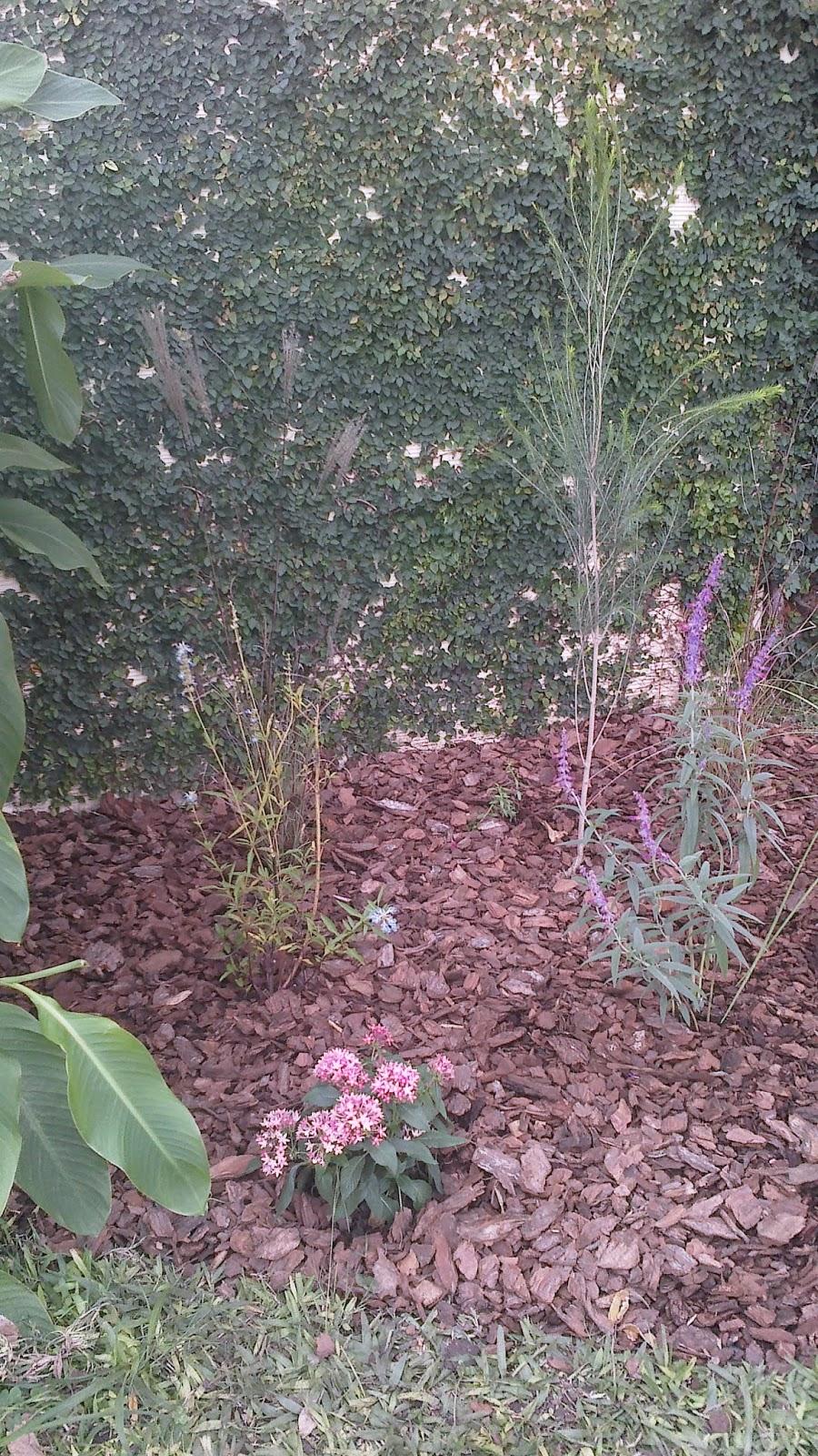 Reverdir jardineria y paisajismo galeria con palmeras for Jardineria y paisajismo