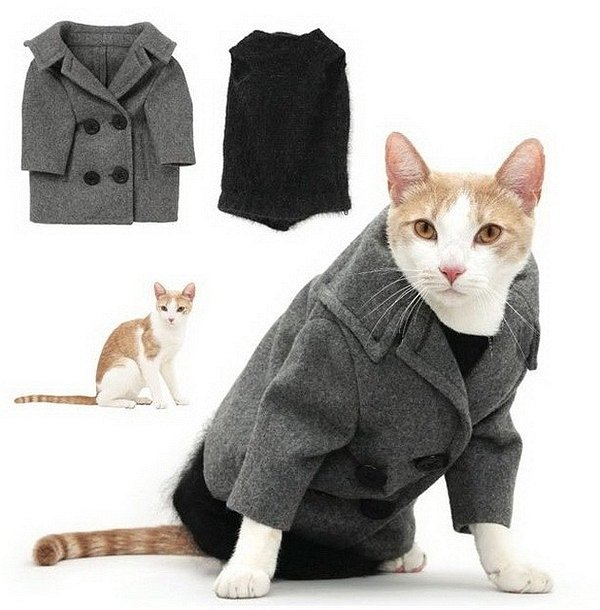 trendy clothes for cats