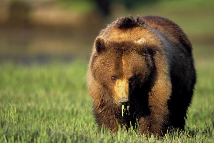 Wildlife   Wild Life A...