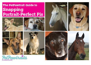 Sign up for my newsletter and get The PetPawtrait's Guide to Snapping Portrait-Perfect Pix