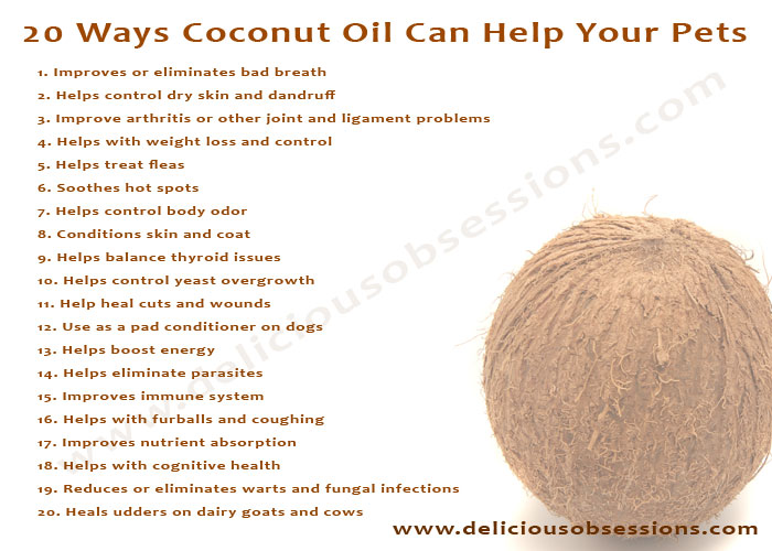 Can I Put Coconut Oil On Dogs Skin