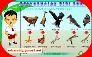 Penyesuaian Hewan Secara Morfologi Terhadap Lingkungan