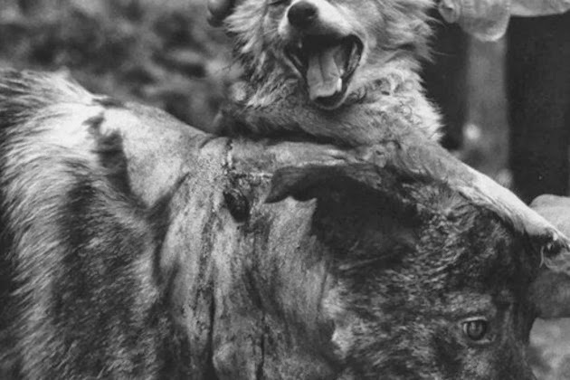 The History Of The Two-headed Dog Experiment