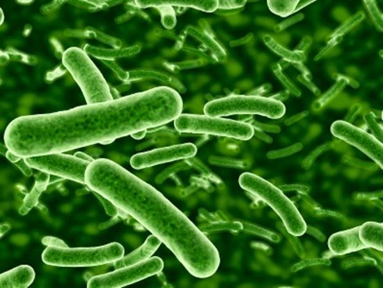 Manfaat probiotik bagi kesehatan