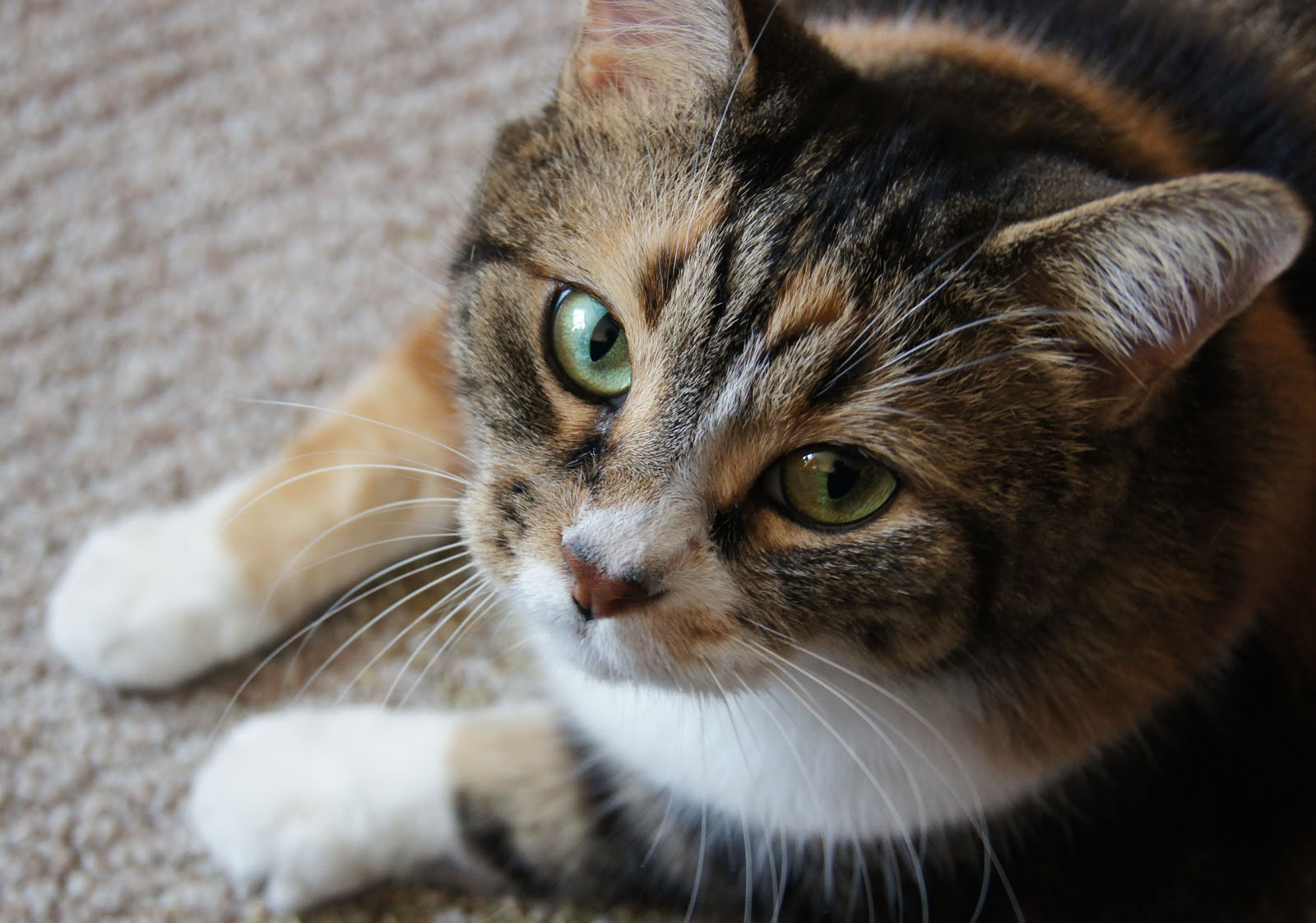 DivaPaws4Advice: Saturday File: COOL CAT TIME = Make Time