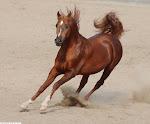 نفسي أركب حصان