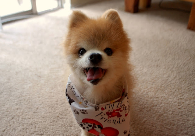 cute puppy image