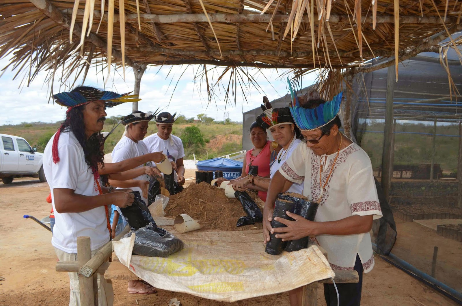 Governo reintegra, por meio da agricultura, tribo indígena Payaya na Bahia