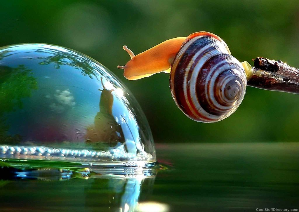 Ukrainian Vyacheslav Mishchenko made a memorable picture of the meeting on the water and bubble snails