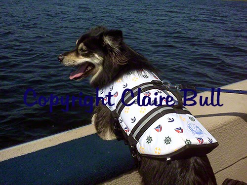 Dog in lifejacket enjoying boat ride