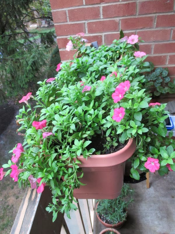 how to get rid of budworms on petunias