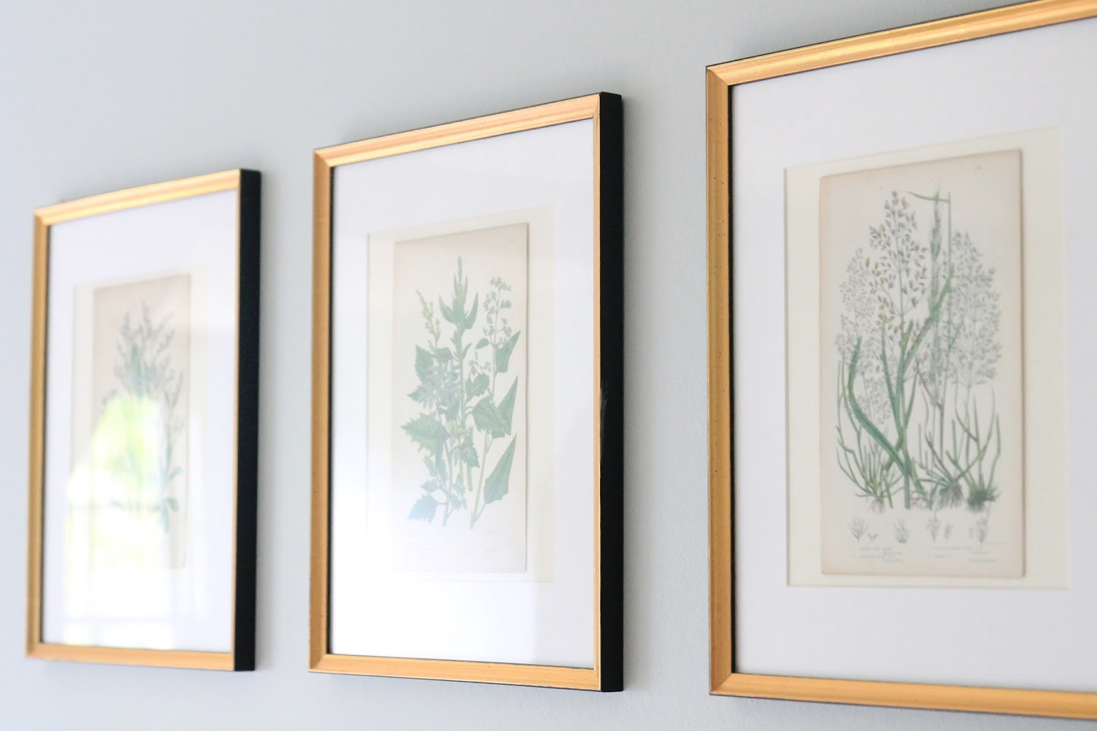 Jenny steffens hobick framing botanicals antique mirror find we have a really expensive looking display for our guest room he was right they are completely elevated from the spray painted reused cream frames jeuxipadfo Images