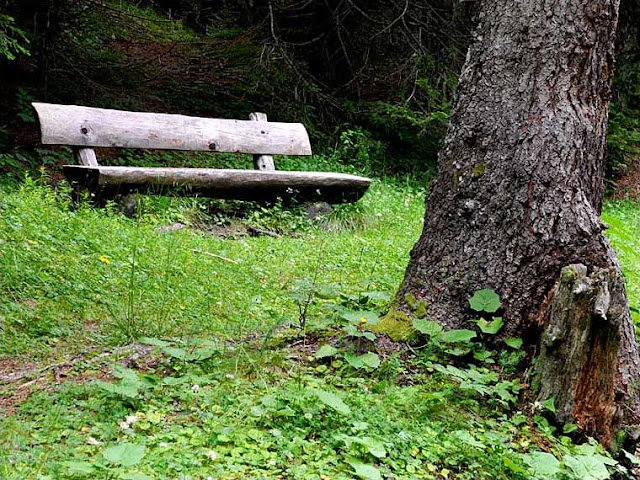 Bench in the forest, Vinschgau Valley (Val Venosta), South Tyrol