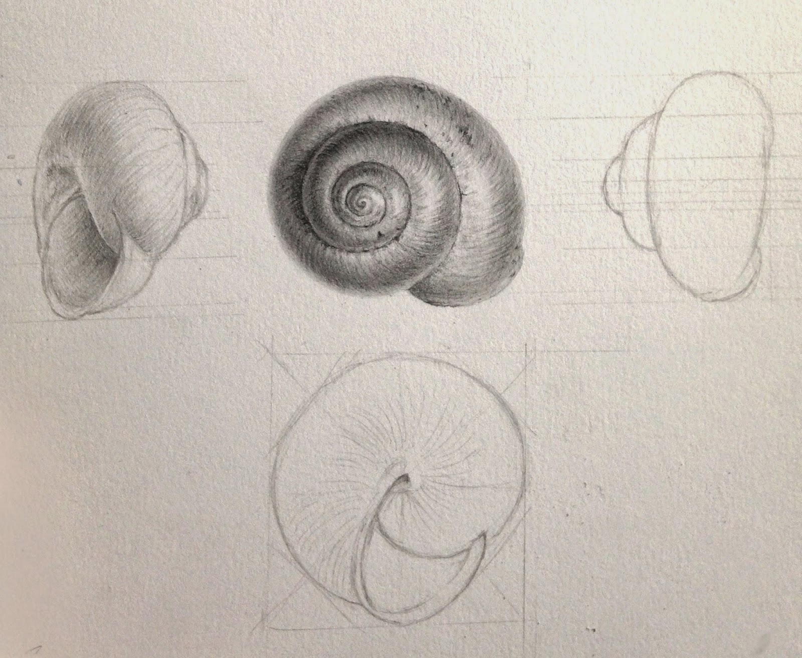 A Garden Shell Drawn In My Sketchbook ( Details Of How This Was Drawn At  The End Of The Post). Simple Face Seven On And Profile Views ( Scale X 2.5).