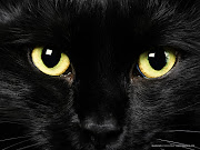 It's a mean black cat