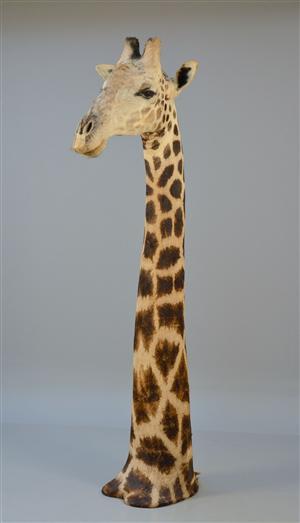http://www.lauritz.com/da/auktion/skuldermonteret-udstoppet-hangiraf-giraffa-camelopardalis/i4086212/
