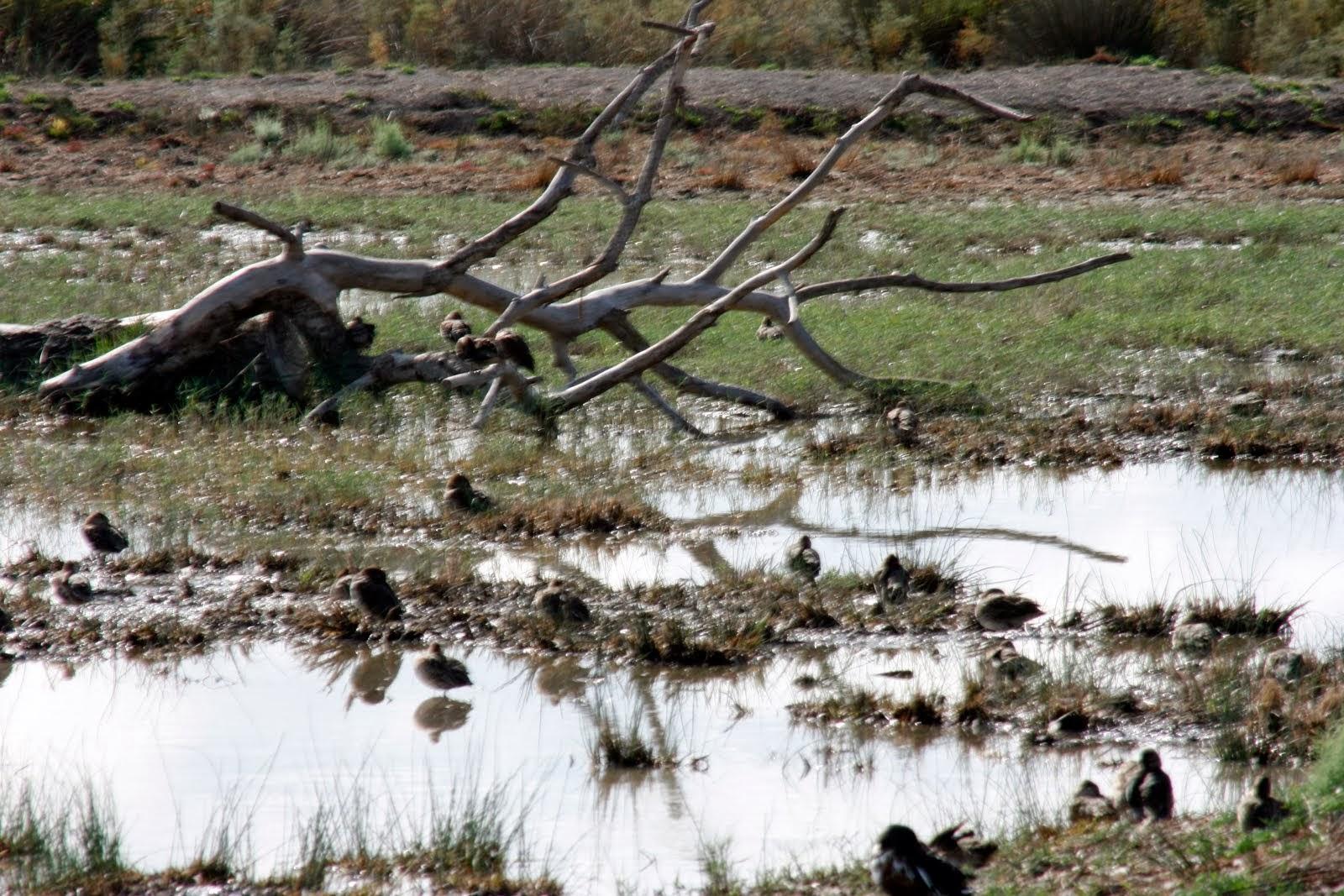 albufera marshes