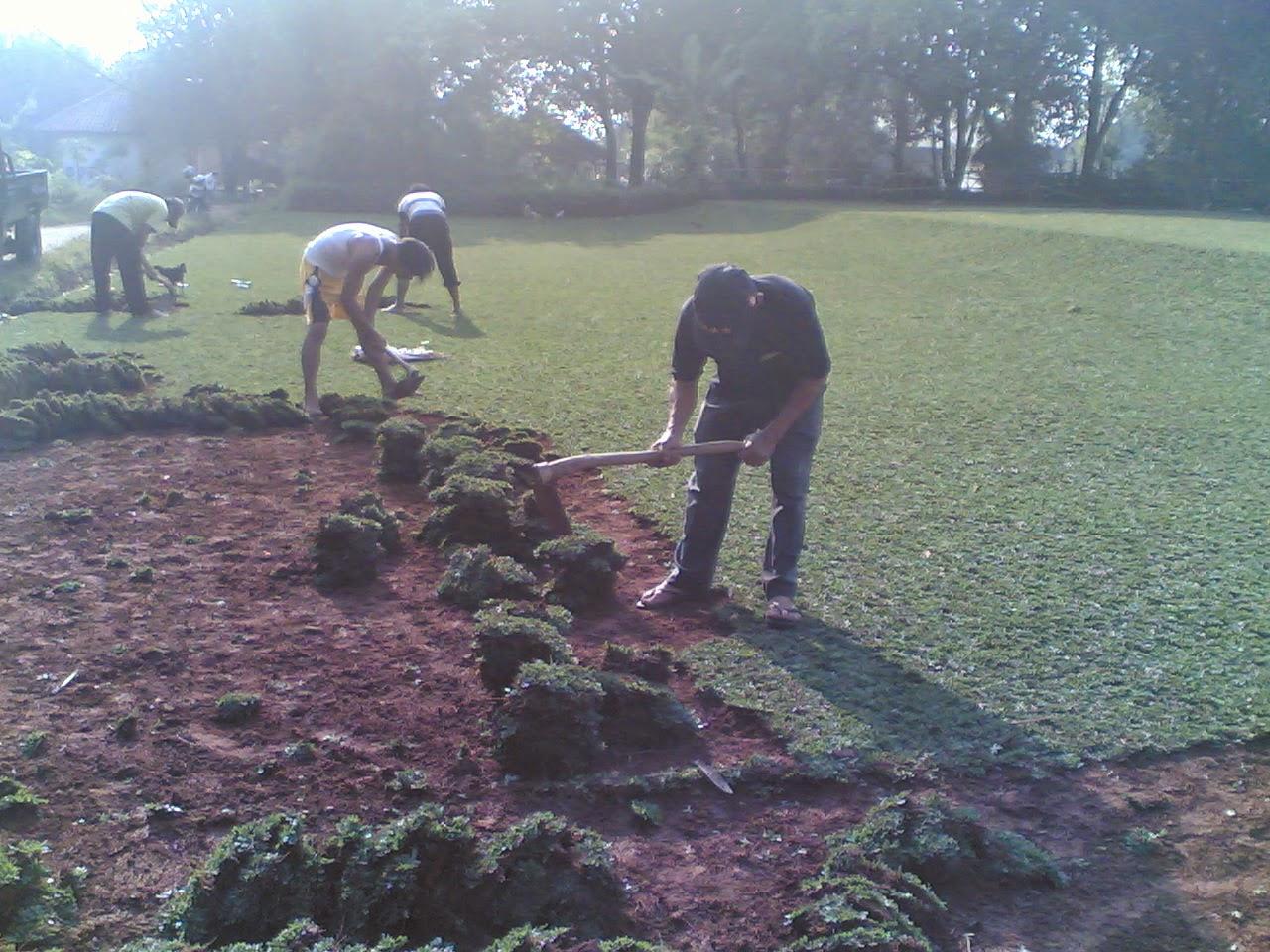 Tukang rumput | Jasa tukang taman | Potong rumput | suplier tanaman hias | Saung gazebo | Kolam minimalis | Relife | Taman kering | Taman bali