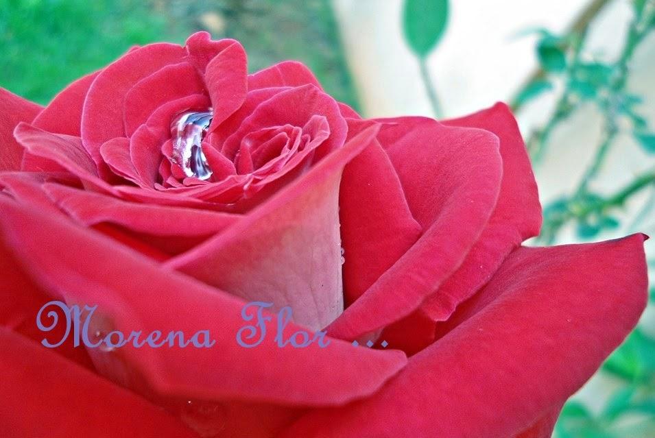 Morena Flor ...